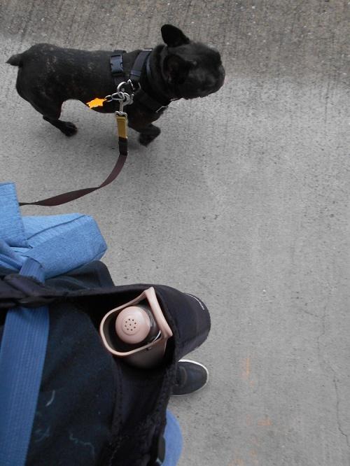 18091402セーフティーリードお散歩並走出来るから両手空いて写真撮れる
