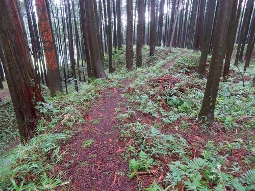 furumiya (4)
