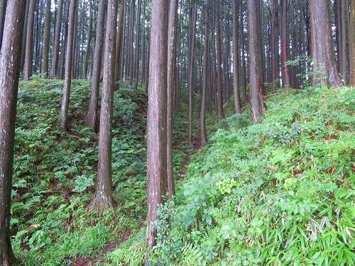 furumiya (6)