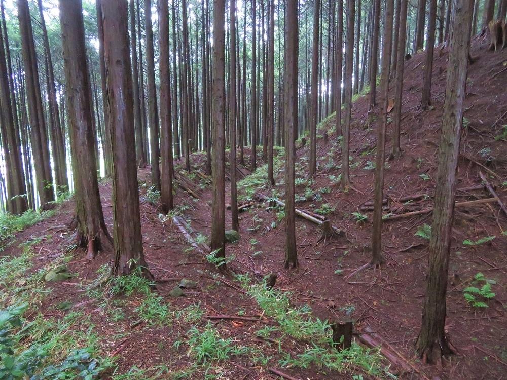 furumiya (8)