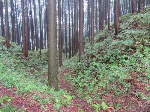 furumiya (9)