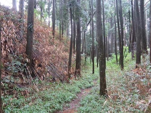 mkameyama (8)