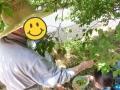 黙々と梅の収穫…暑さも忘れる!?