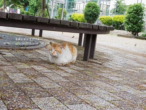 朝猫さん3