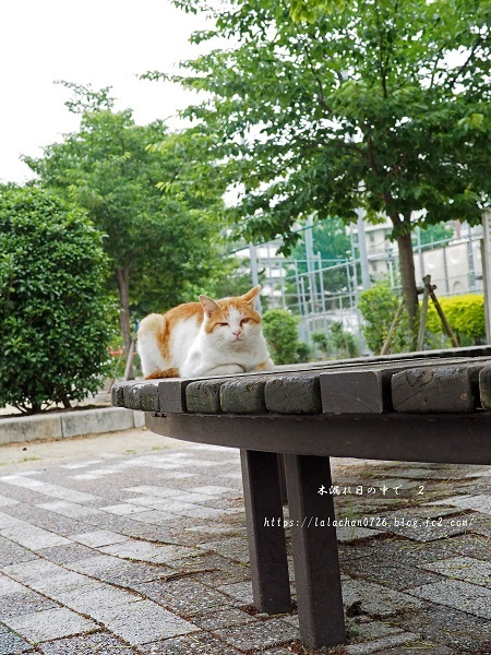 朝猫さん2