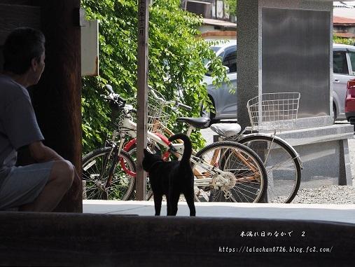 猫とオッちゃん2