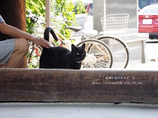 猫とオッちゃん3