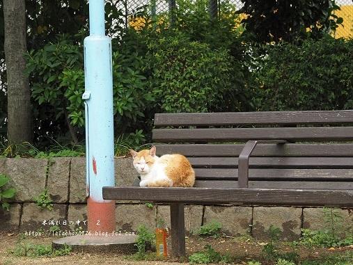 ベンチ猫さん1