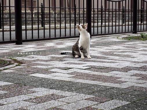 木登り猫さん5