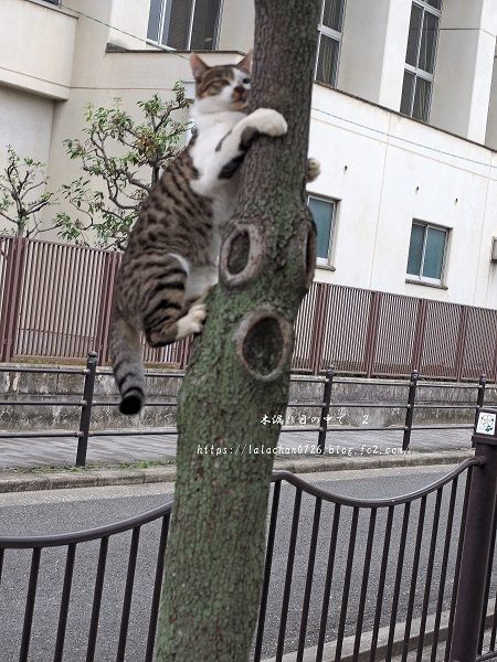 木登り猫さん2