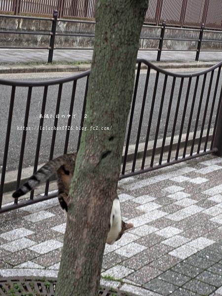木登り猫さん4