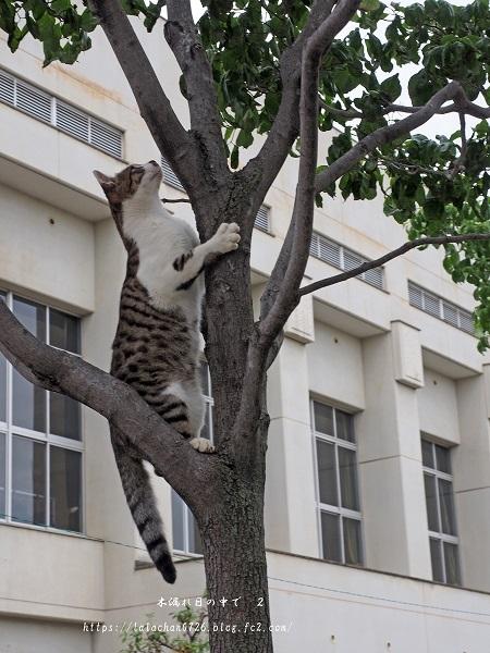 木登り猫さん1