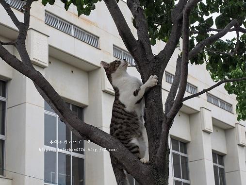 木登りネコさん7