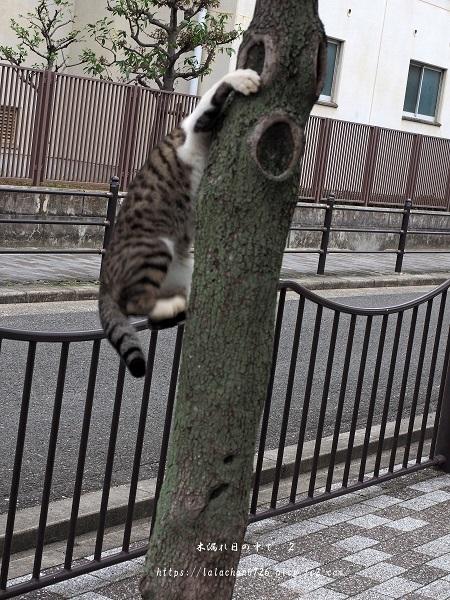 木登りネコさん3