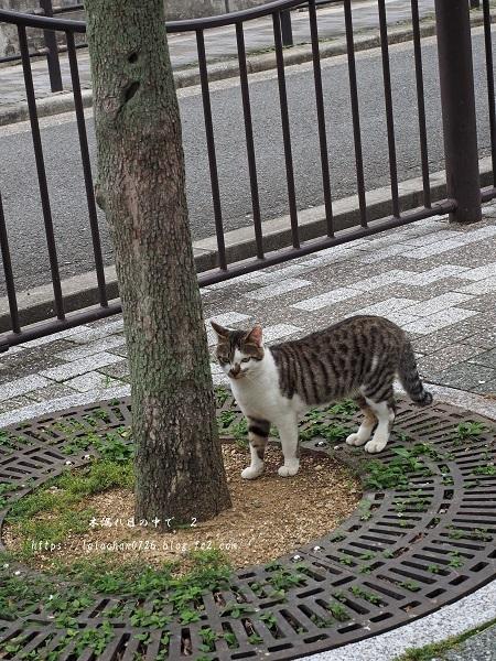 木登り猫さん6