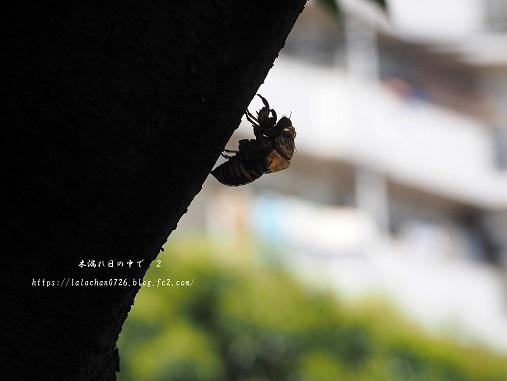 蝉の抜け殻1