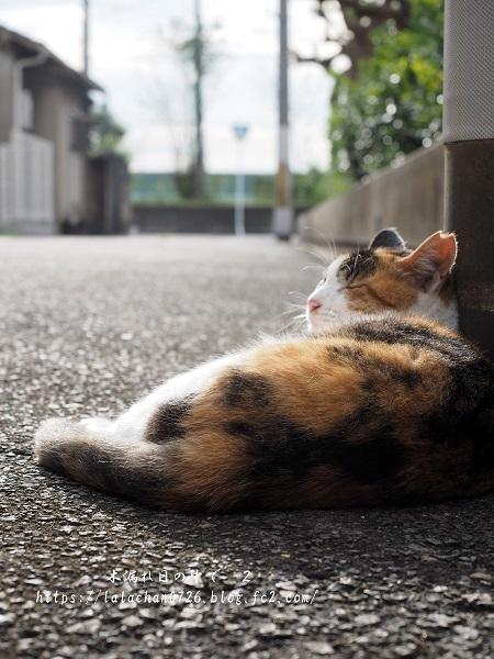夕暮れ猫さん3