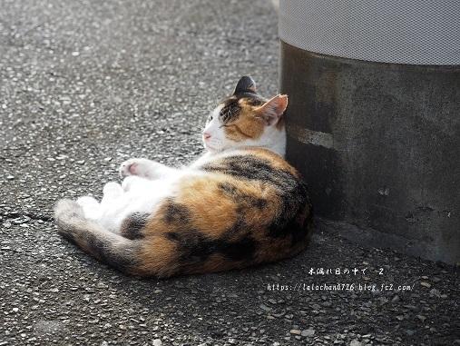 夕暮れ猫さん2
