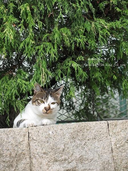 公園猫さん2