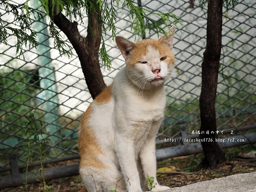 公園猫さん1