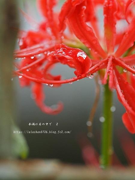 秋雨前線2