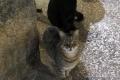 12 クロアチアのいたる処に猫がいる