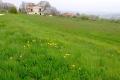 2.なだらかな牧草地帯