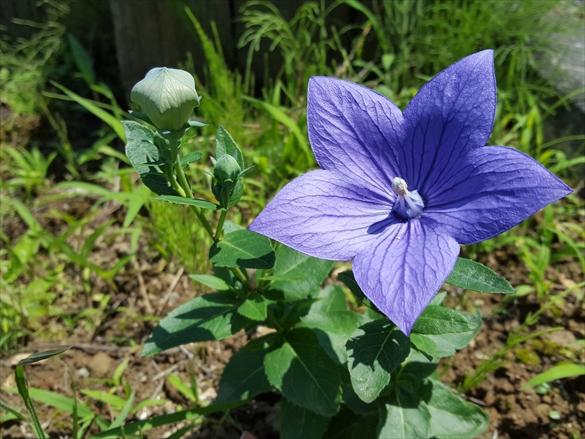 種蒔いたら花