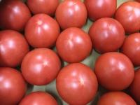柏の美味しいトマト