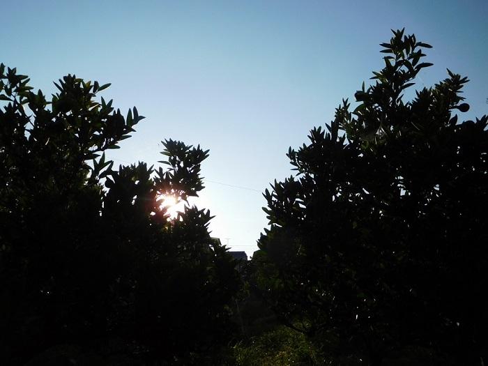真夏の朝3007