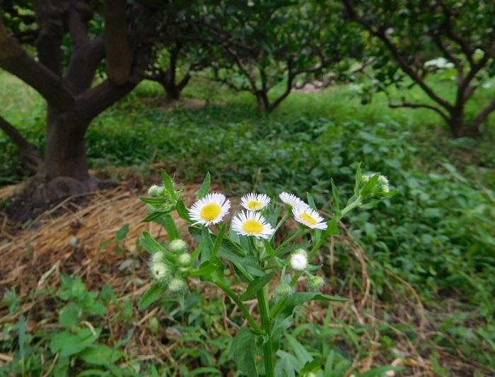 雨降って花咲く3008