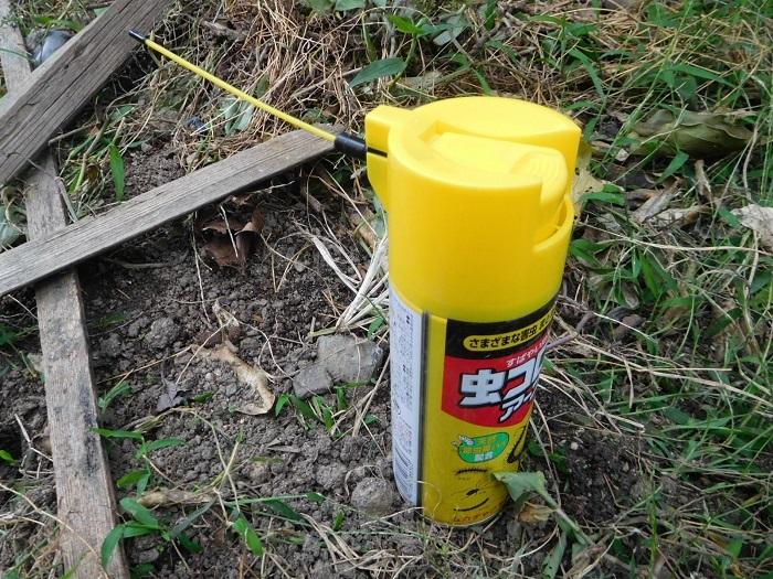 雨の日前の害虫駆除3009 (1)