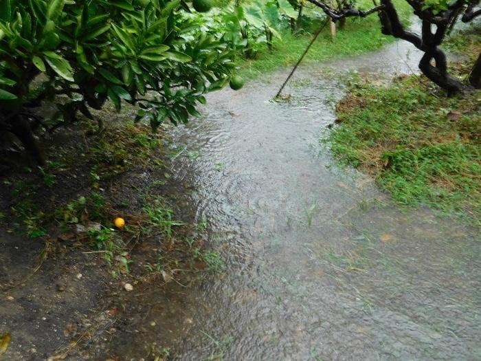 農家ご飯と雨3009 (3)