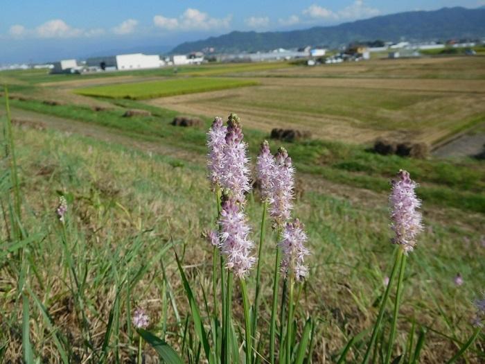 河川敷3009 (2)