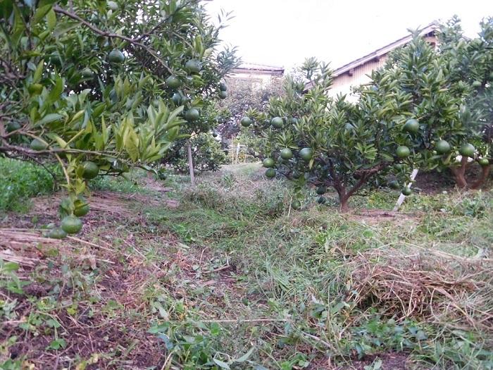 秋の草刈3009 (2)