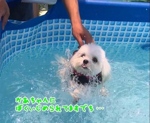 水泳大会9-crop