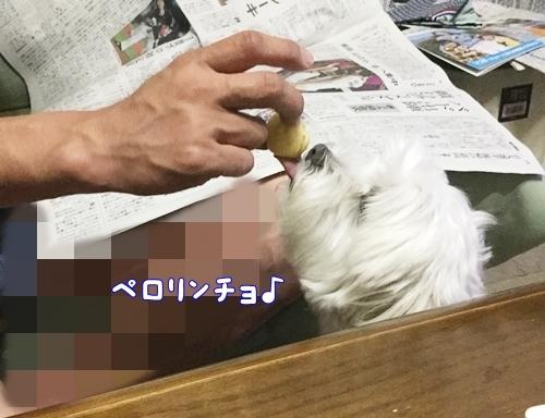 煮干し4-crop