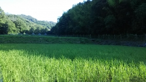 180714下の田の畔から見た景色