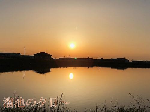 溜池の夕日