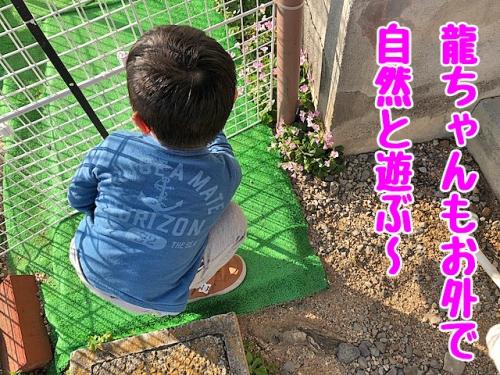 龍ちゃんも自然と遊ぶ