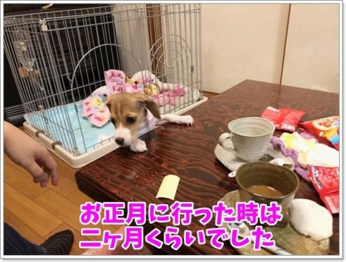 二ヶ月の桜子