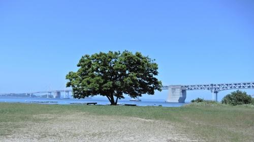 沙弥島のナカンダ浜にあるエノキ