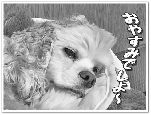 おやすみでしよ~
