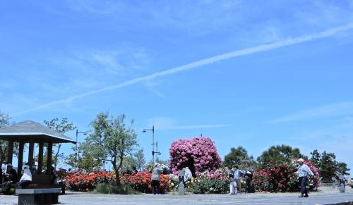 青い空とバラ園