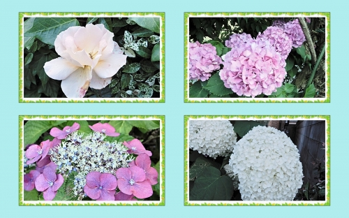 ご近所の花たち3