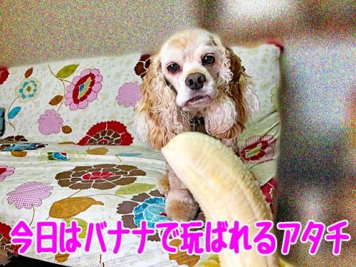 今日はバナナで