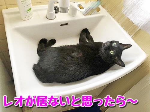 洗面台の中1