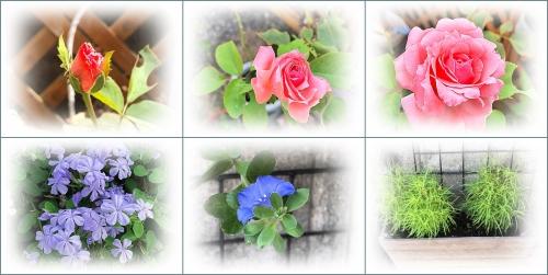 お花のコレクション