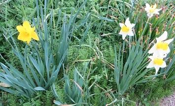 野の花・3