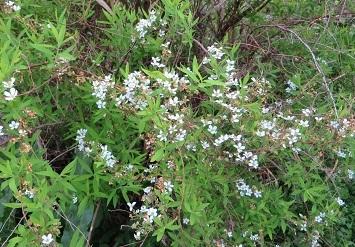 野の花・5